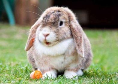denti del coniglio trentino